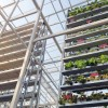 sky-greens-singapore-worlds-first-vertical-farm-100x100