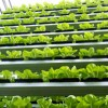 sky-greens-singapore-worlds-first-vertical-farm-2-100x100